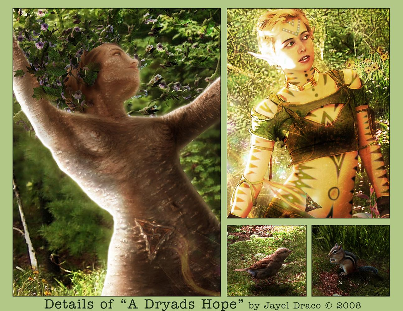A DRYADS HOPE | Detail - Photography and Fantasy Photmanipulation by Jayel Draco