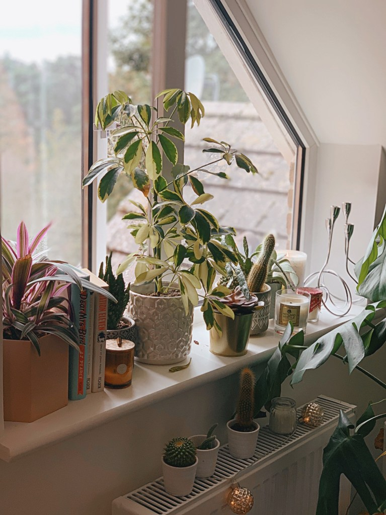 Jaye Rockett Home Windowsill Plants