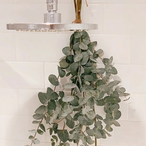 Jaye Rockett Eucaluptus hang shower white subway tile bathroom