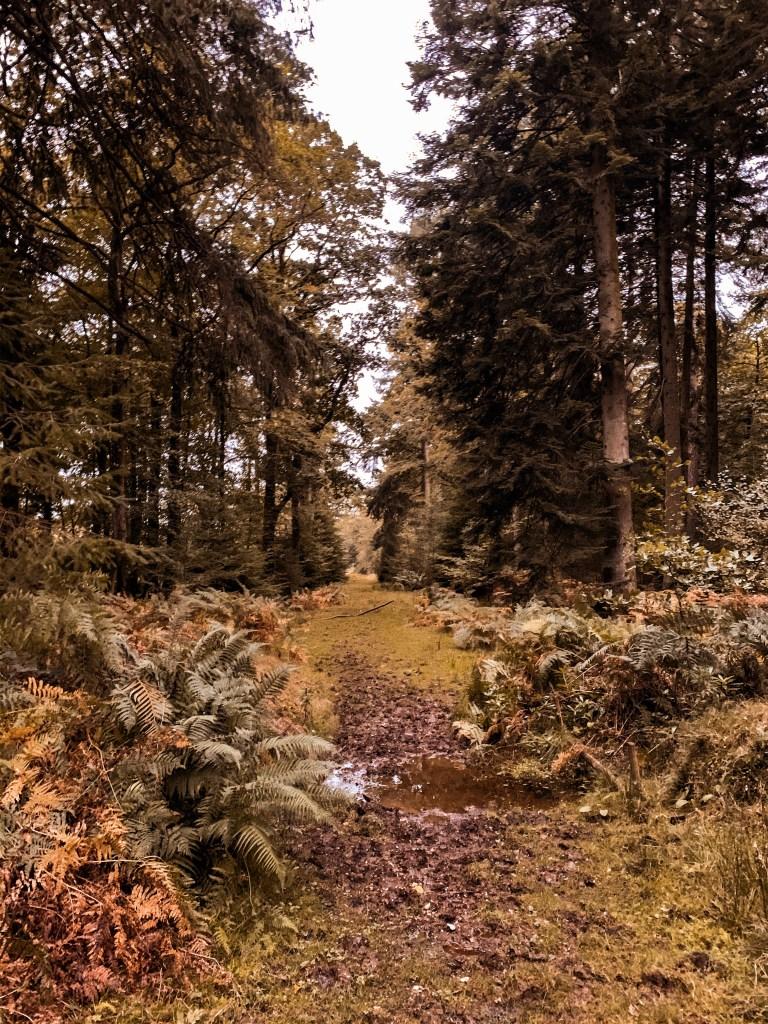 Jaye Rockett new forest national parkF