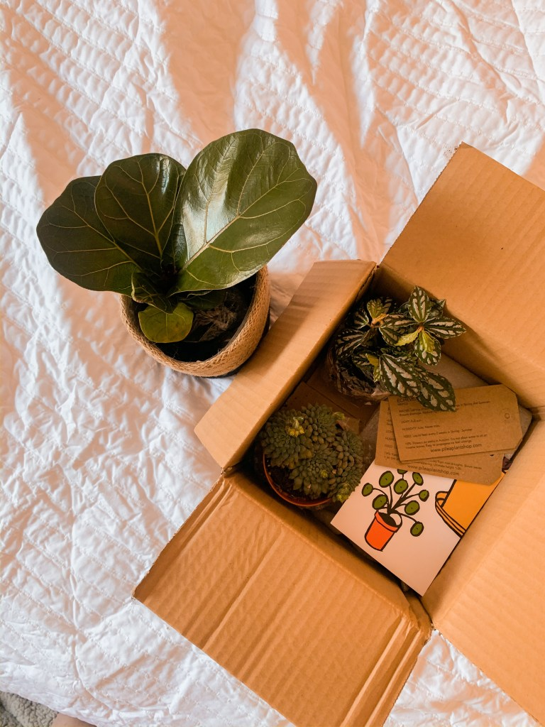 pilea plant shop frome plant delivery package jaye rockett
