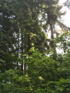 UBC Botanical Garden Treetops