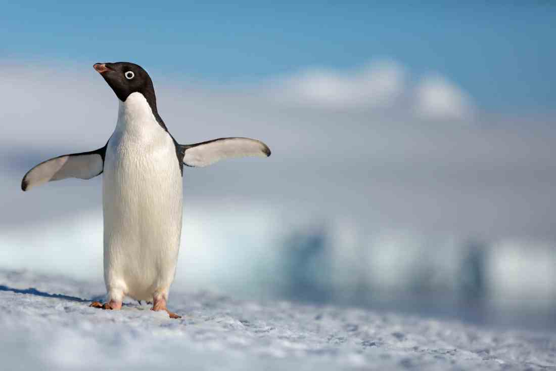"Disneynature Penguins. Disneynature's all-new feature film ""Penguins"" is a coming-of-age story about an Adélie penguin named Steve who joins millions of fellow males in the icy Antarctic spring on a quest to build a suitable nest, find a life partner and start a family."