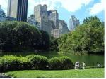 Job Opportunity City Of The Week: New York City