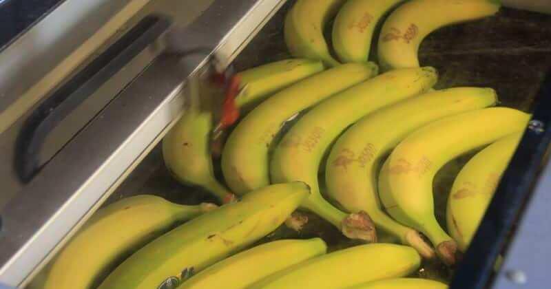 bananen graveren