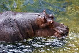 happy-hippo-play-farm