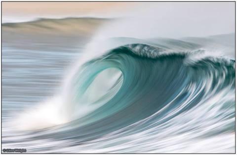 seals wave