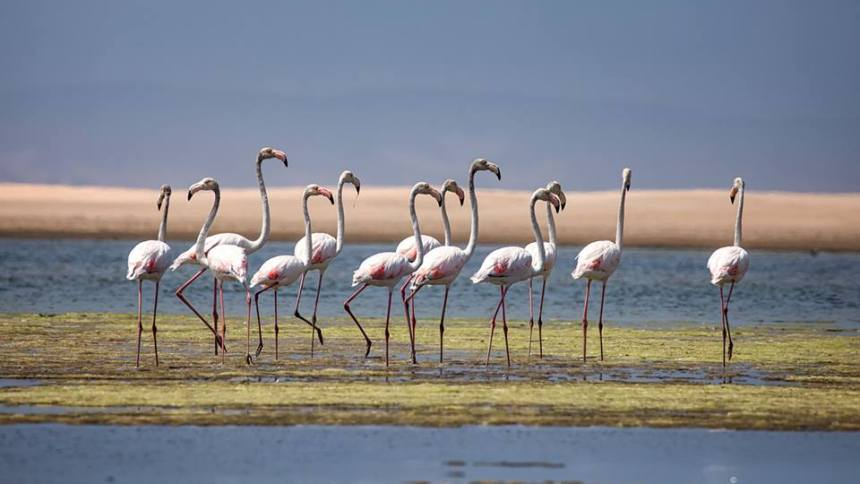 flamingos kabeljous river jeffreys bay jbay news