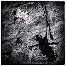 einsame Blüte