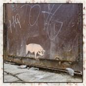freilaufendes Schwein