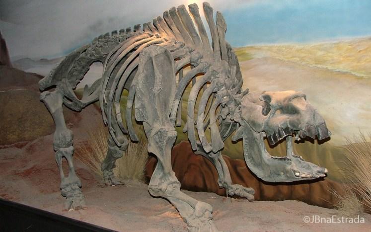 Argentina - Trelew - Museo Paleontologico