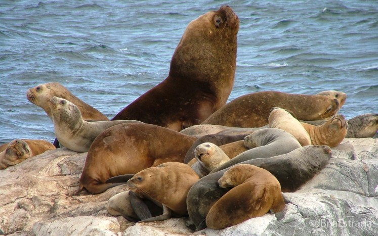 Argentina - Ushuaia - Navegacao no Canal de Beagle - Isla de los Lobos