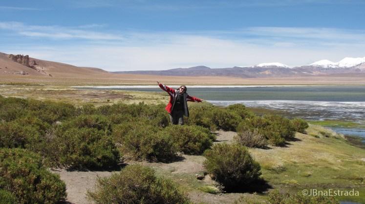 Chile - Atacama - Reserva Nacional Los Flamencos - Salar de Tara
