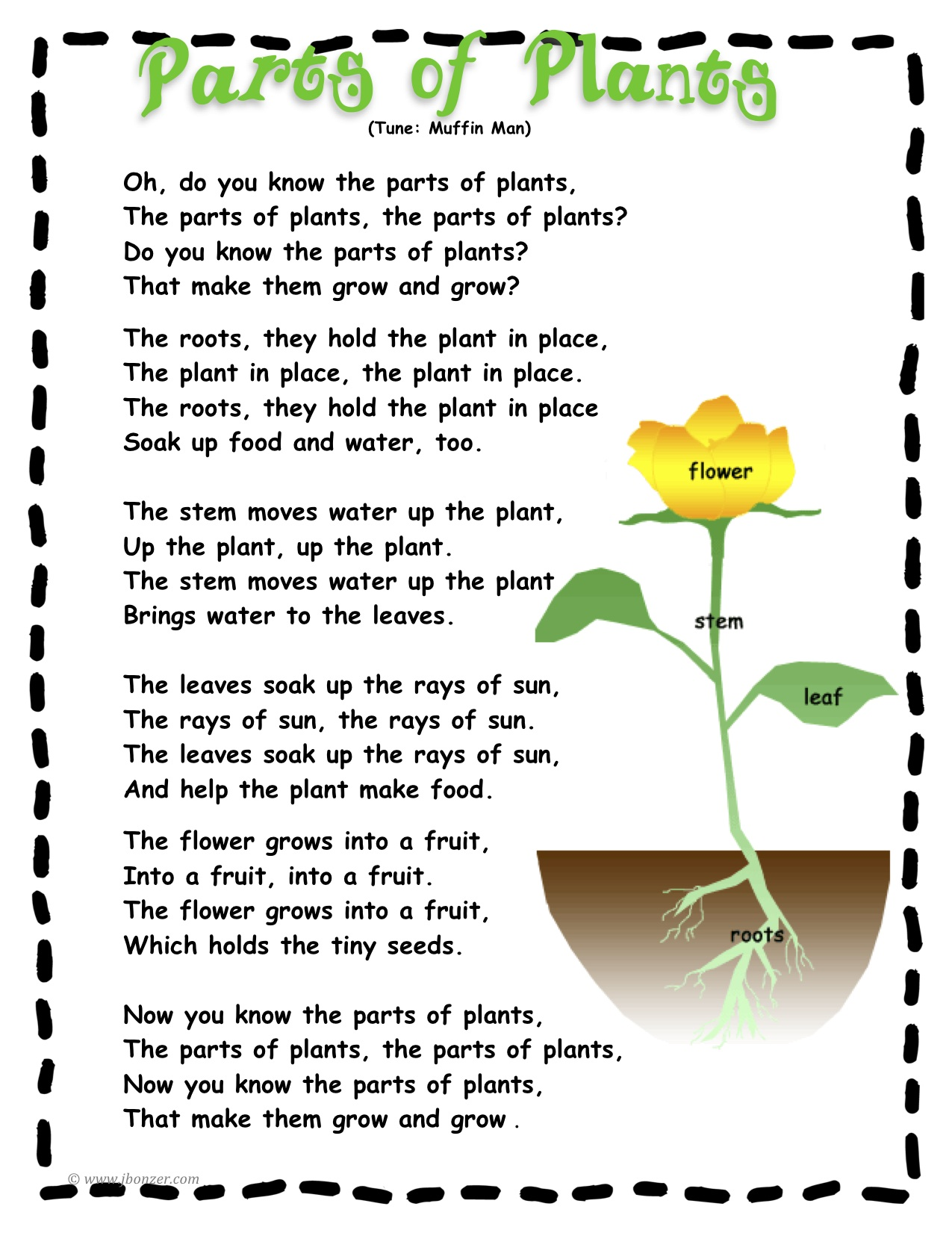 Parts Of A Tomato Plant Worksheet