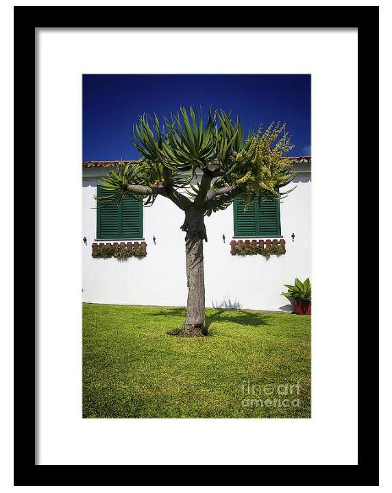 dragon tree garden house framed print