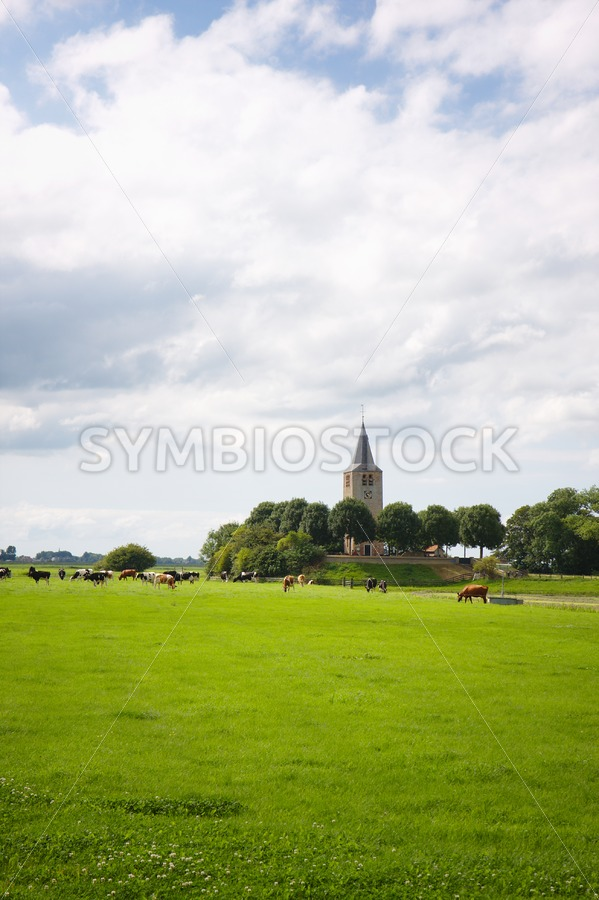 Friesland meadow cattle church - Jan Brons Stock Images