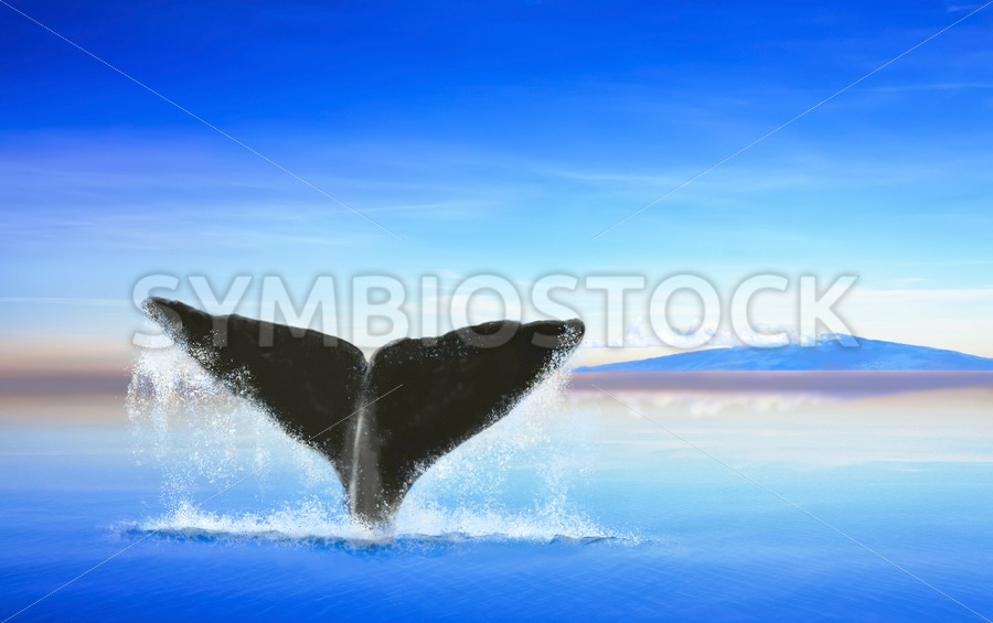 Whale tail on ocean with an island - Jan Brons Stock Images