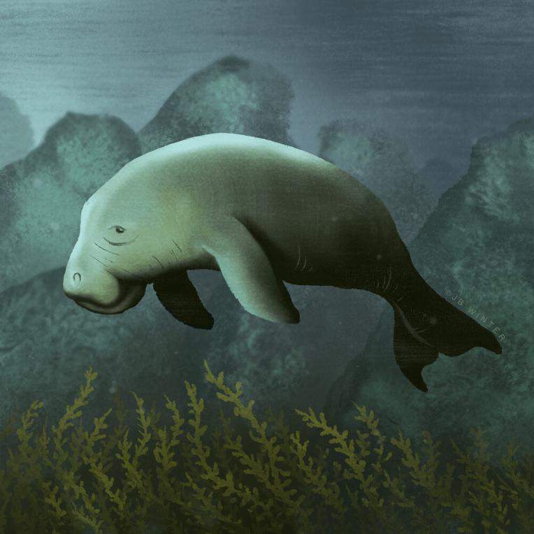 Dugong – J B  Winter