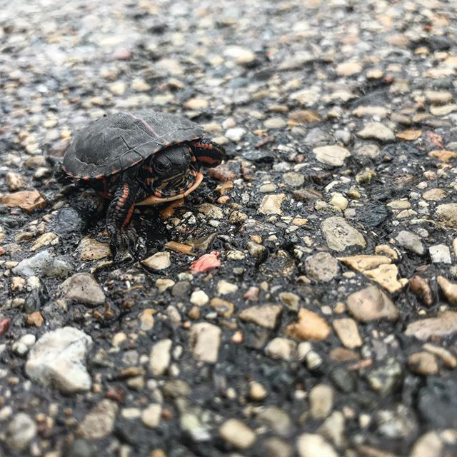 Ran into this little guy during a walk yesterday.