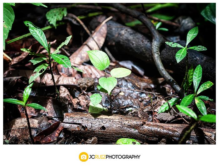 landscape photographer Costa Rica
