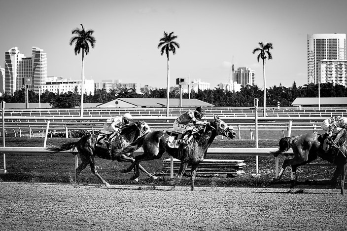 Horse racing at Gulf Stream Park in Hallandale, FL
