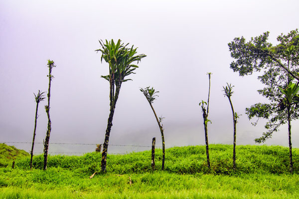 Costa Rica Fog