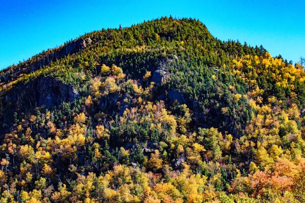 foliage white mountains