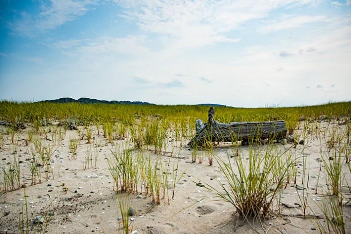 Log on an empty beach