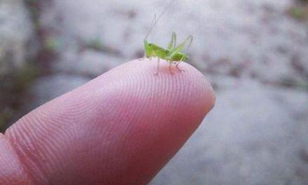 Soyez bon avec toutes les créatures. De la plus petite à la plus grosse.
