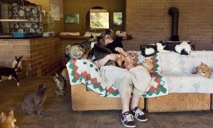 Lynea sauve 24 000 chats abandonnés en les accueillant dans un véritable paradis où ils peuvent vivre en harmonie
