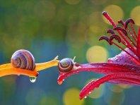 Il nous montre le monde magique des escargots!