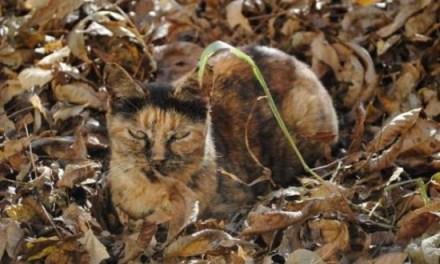 Des Chats en Mode Camouflage
