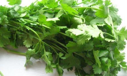 Un petit truc pour conserver des feuilles de coriandre!