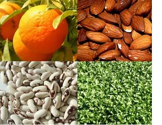 Les sources de calcium végétal: le calcium, sans lait!