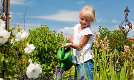 Canicule: 6 astuces pour prendre soin de votre jardin