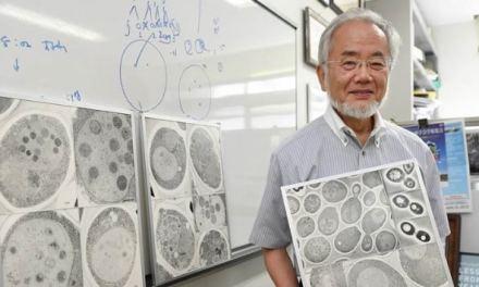 Prix Nobel de médecine 2016 : Yoshinori Ohsumi récompensé pour ses travaux sur l'autophagie