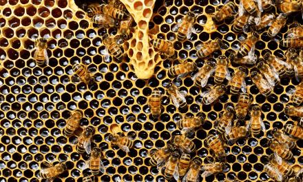 17 villes favorables aux abeilles labellisées « ApiCité »