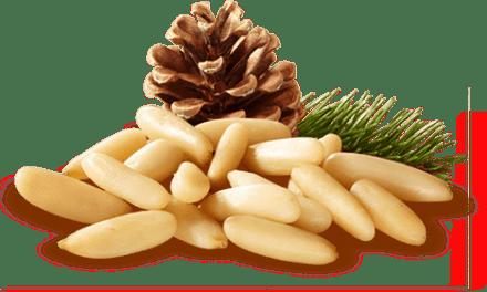 Les bienfaits des pignons de pins par Jean Pelissier