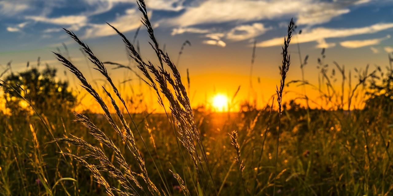 Un programme d'un milliard de dollars pour l'agriculture durable
