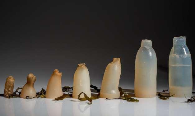 La bouteille bio dégradable pour remplacer les bouteilles en plastique.