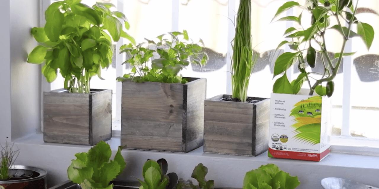 Créez-vous un vrai petit potager dans votre cuisine avec vos restes de légumes!