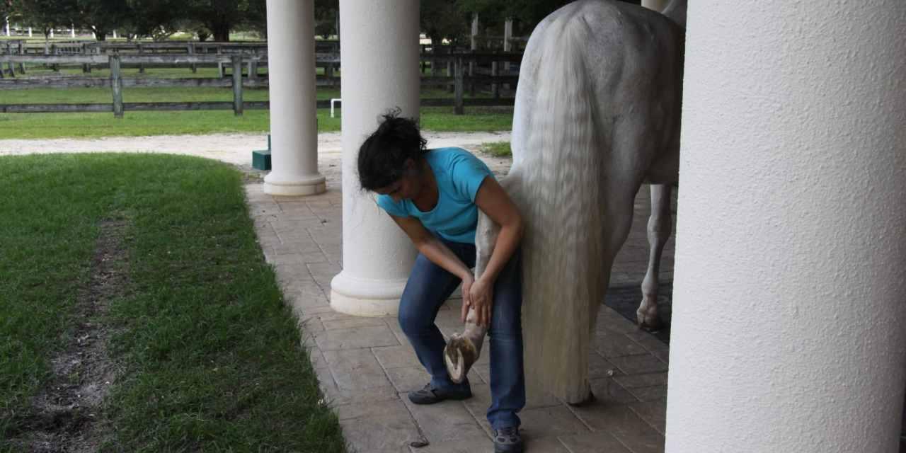 La Massothérapie Animale, Natacha Zammit nous explique ses bienfaits.