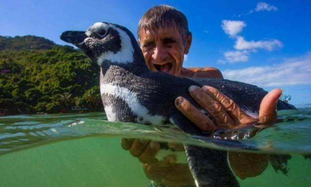 Tous les ans, le pingouin Dindim parcourt 8000 km pour retrouver Joao, un brésilien qui lui a sauvé la vie !