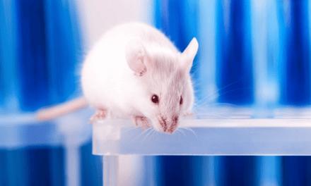 Expérimentation animale : où en est la méthode alternative Valitox ?