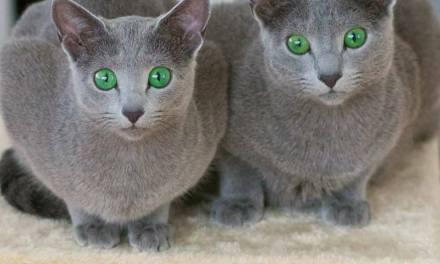 Les yeux verts…