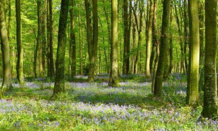 France – Reforestation : un appel à projets pour « planter un million d'arbres »