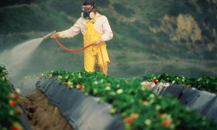 États-Unis : premier procès sur de possibles effets cancérigènes du RoundUp