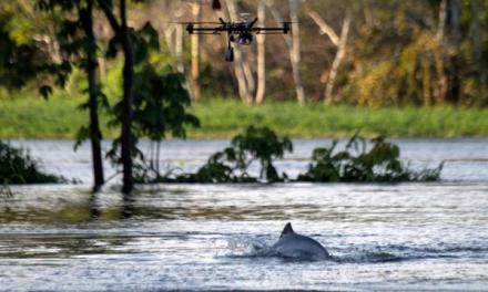 Brésil : les drones au service de la préservation des dauphins de l'Amazonie