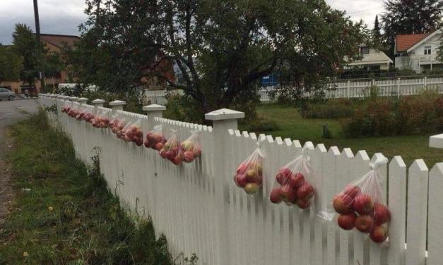 En Norvège …Quand on a trop de pommes, on en fait profiter les autres. idée à suivre?