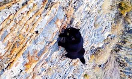 Cet homme a le meilleur partenaire d'escalade de tous les temps – Millie son chat.